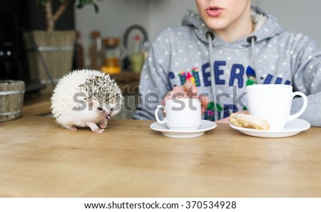 The African hedgehog creeps on a kitchen table. There are cups and saucers. - stock photo
