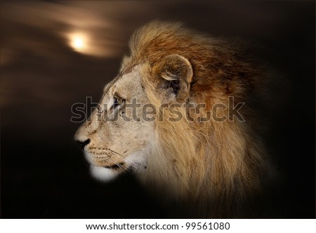 The African king with a background of moon and clouds./ Moonlight lion.