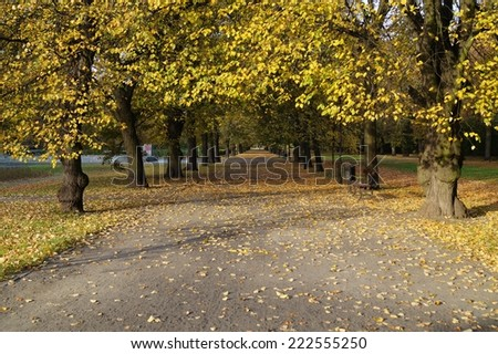 The alley in the shade of the autumn trees -  park in Lodz