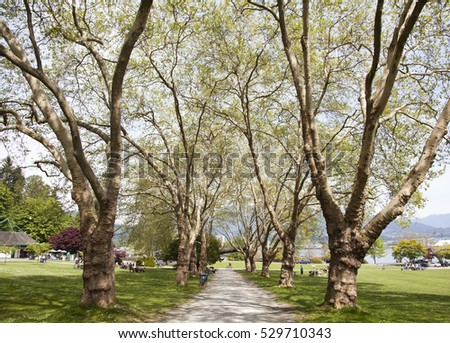 The alley of tall trees in Stanley park (Vancouver, British Columbia).