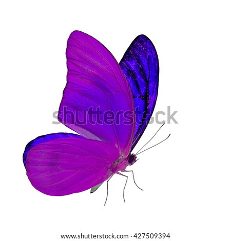 color profile color butterfly flying isolated on white stock photo 146449802