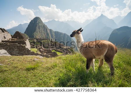 The ancient city of Machu Picchu, Peru. Llama overlooking ruins on the Inca citadel in the Andes Mountains and the river valley below - stock photo