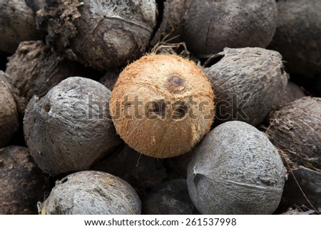 The ant on coconut shell - stock photo