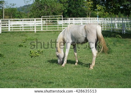 The Arabian or Arab horse is a breed of horse that originated on the Arabian Peninsula.