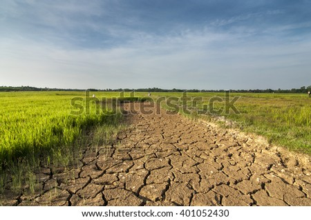 the arid land at the paddy field. nature and wide composition. soft focus on the sky.  - stock photo