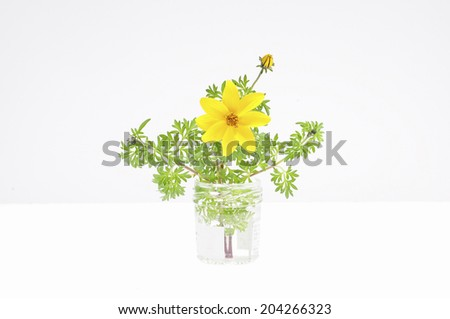 The Arrangement Of The Cosmos In White Background