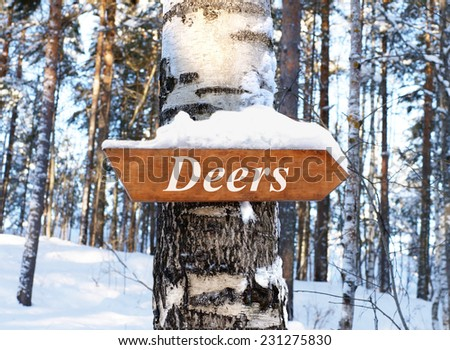 The arrow points to the forest home of reindeer. Arrow with the inscription deers. Winter Forest. Fabulous winter forest. - stock photo