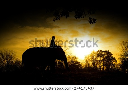 The asian elephant and mahout in forest silhouette