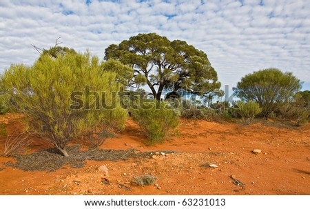 the australian landscape, south australia - stock photo