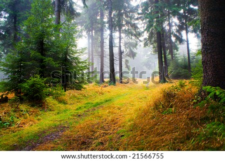 the autumn forest scene. The foggy woods.