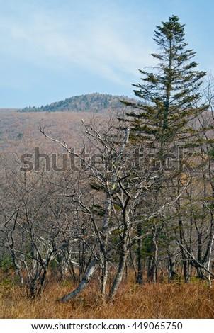 The autumn landscape in taiga. - stock photo