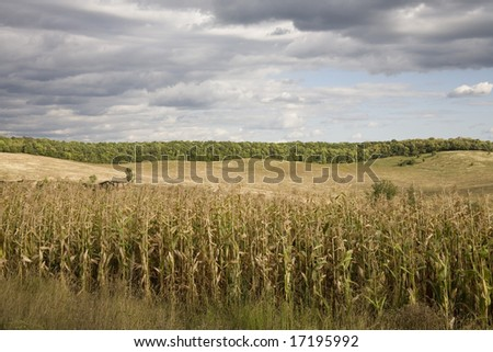 The autumn landscape is before the field of corn above a village, by a valley near the forest.