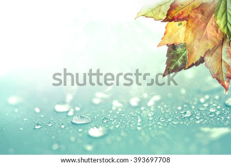 The Autumn leaves and  rain water drops background - stock photo