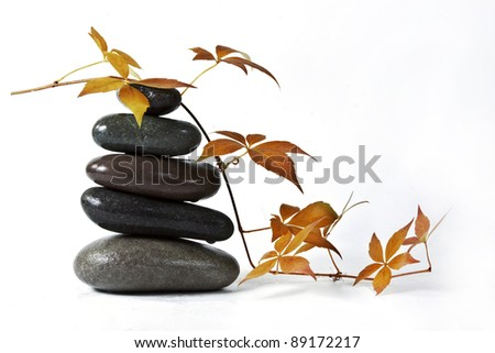 The autumn leaves and stones