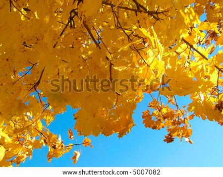 The autumn leaves on background sky.