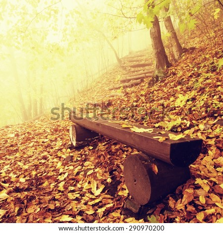 The autumn misty and sunny daybreak at beech forest, old abandoned bench below trees. Fog between naked beech trees. - stock photo