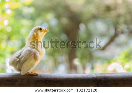 The baby chick with beautiful natural backdrop.