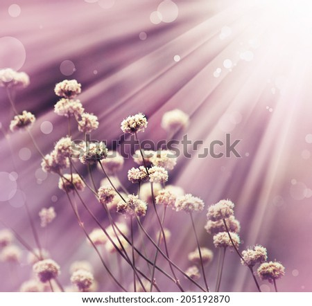 The background image of the colorful flowers with sunshine and color filters. Pink background with little white flowers - stock photo
