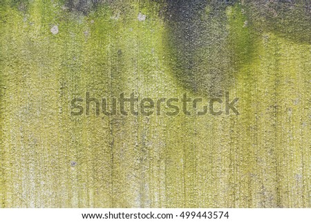 The background is a cement slab with moss green little island.