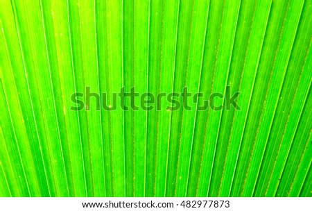 The background of palm green leaves in natural light.
