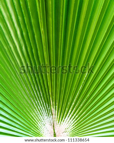 The background of palm leaf. Photo Close-up