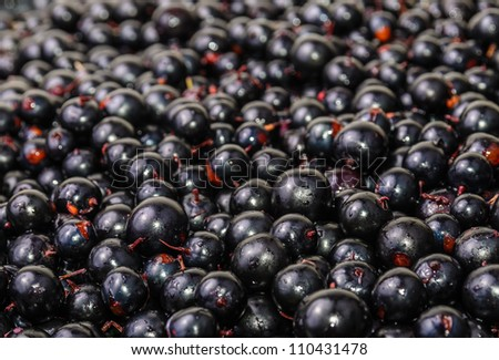The background of the black currant. Photo Close-up - stock photo