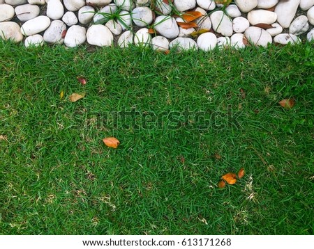 The background of the grass