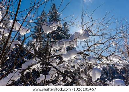 The backlit branches covered in snow near Hayden, Idaho.