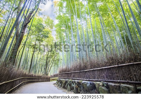 The Bamboo Grove in Arashiyama for adv or others purpose use - stock photo