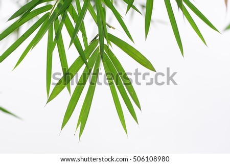 the bamboo leaves in white backgrounds