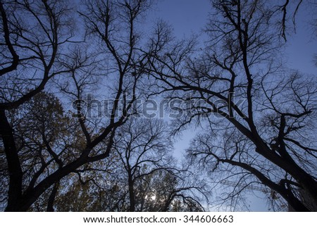 The bare branches of the trees in autumn