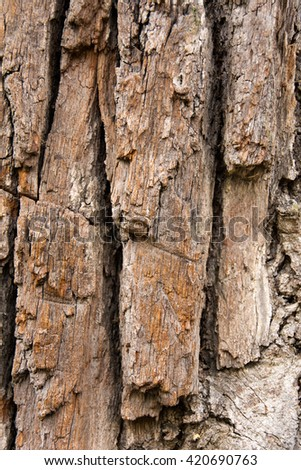 The bark of an old tree
