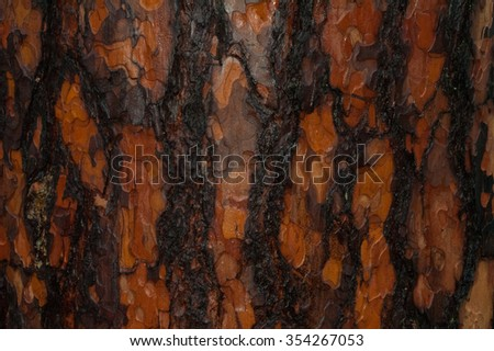 The bark of the pine