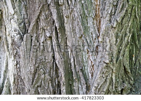 The bark of the tree. Background.