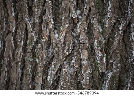 the bark of the tree in the snow
