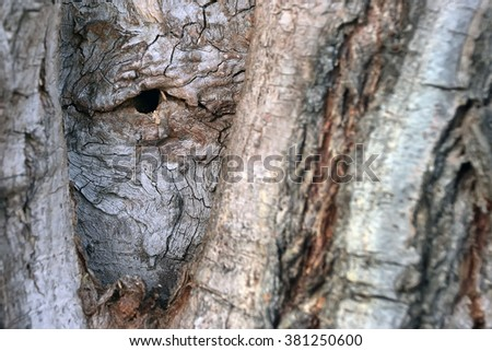 The bark of the tree is similar to the human eye