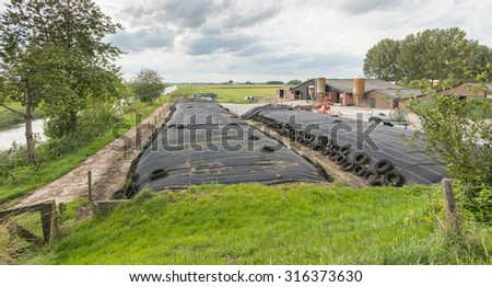 The barnyard of a Dutch farm with grass silage covered with black agricultural plastic foil and car tires and on the side stables with feed silos. - stock photo
