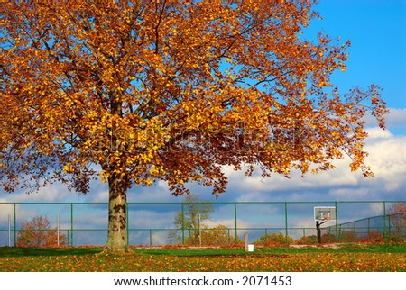 The Basketball Court - A huge tree, with autumn colored leaves looms over the basketball court in October as the sun begins to set. - stock photo