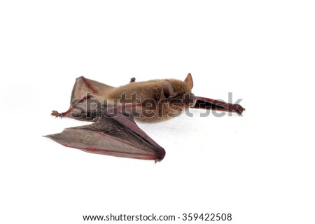The bat on a white background - stock photo