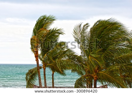 The beach with palm trees