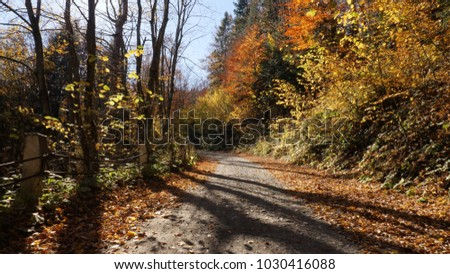The beautiful autumn forest and the sun shining through the foliage.The leaves changing color and peaceful forest. Autumn nature landscape. Fallen leaves lying on the ground.