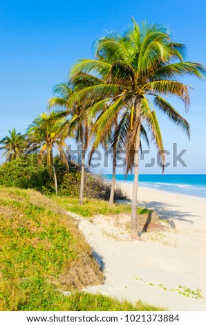 The beautiful beach of Varadero, Cuba.