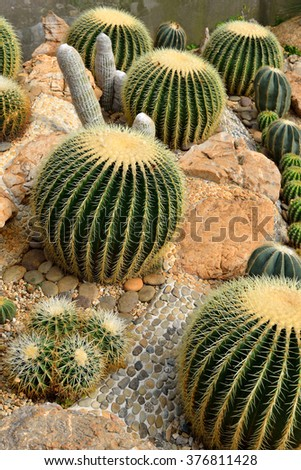 The beautiful big cactus planted in a botanical garden
