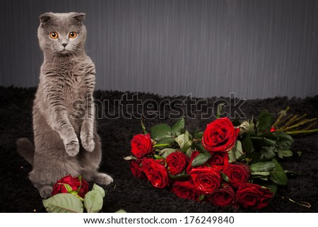 the beautiful British cat and  a lot of red roses  - stock photo