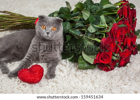 the beautiful British cat and is a lot of red roses
