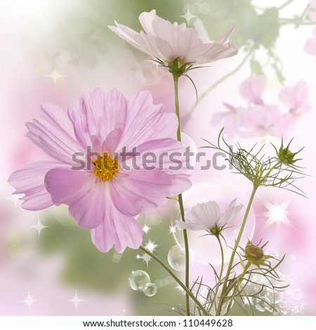 The beautiful decorative spring flowers - stock photo