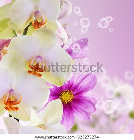 The beautiful flowers.Nature background - stock photo