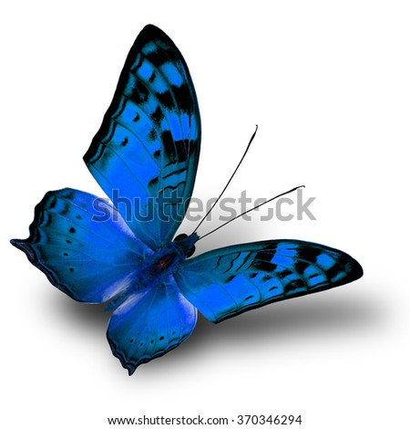 The beautiful flying blue butterfly on white background with shade beneath - stock photo