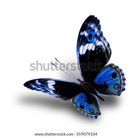 the beautiful flying blue butterfly with nice soft shadow beneath on white background, blue pansy butterfly in fancy color profile - stock photo