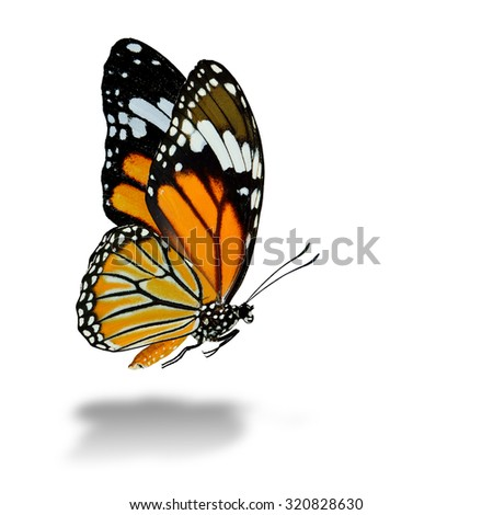 The beautiful flying Common Tiger butterfly with soft shadow beneath on white background - stock photo